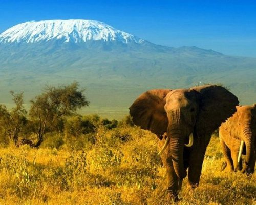 Amboseli 4